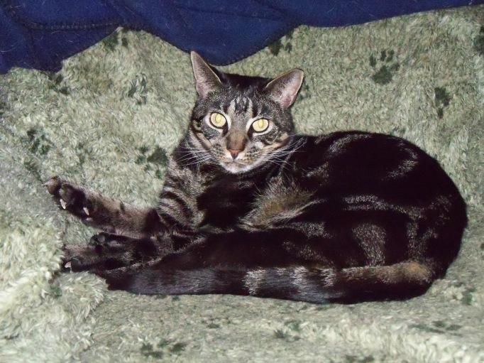 Hiro cat on chair