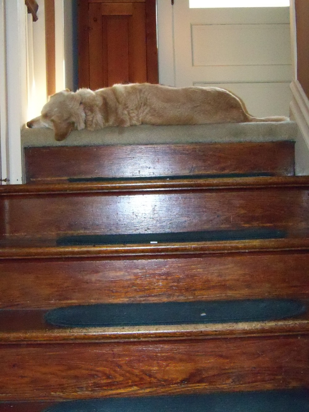 Butterscotch on stairs