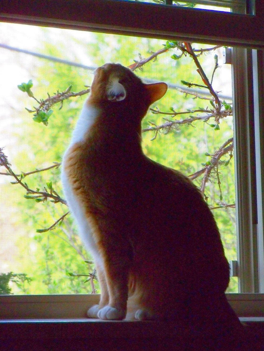 Minh in window