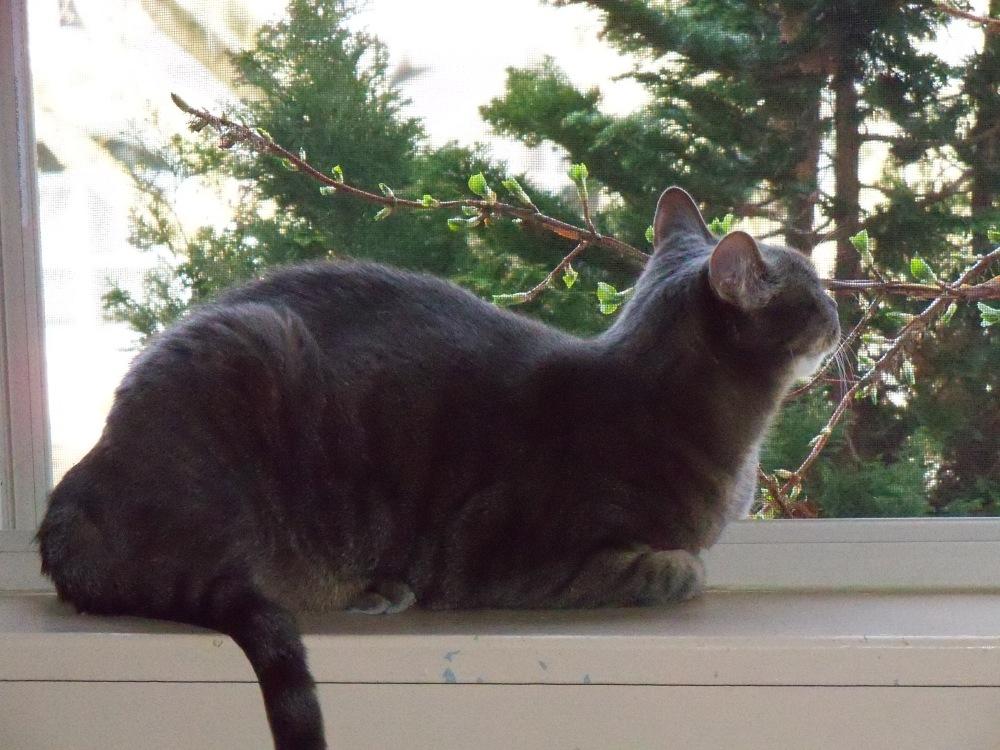 Thomas in window
