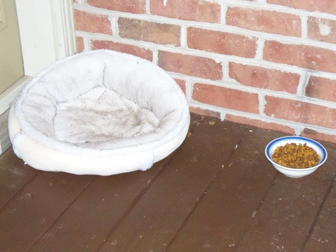 Feral kitty bed