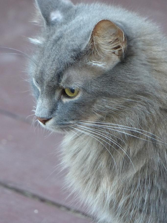 Kitty #1