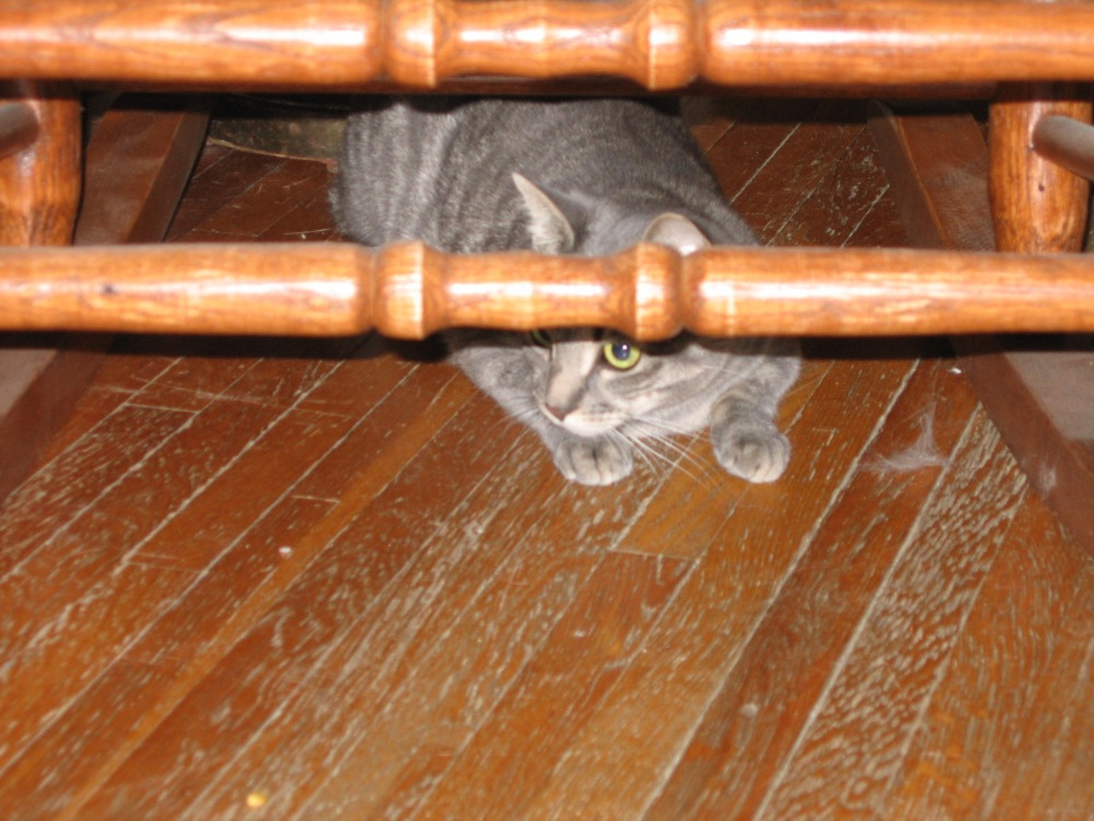 Lily under the chair