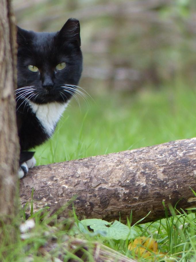 Black cat behind tree