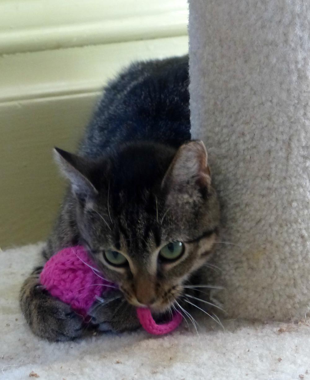 Annie on catnip