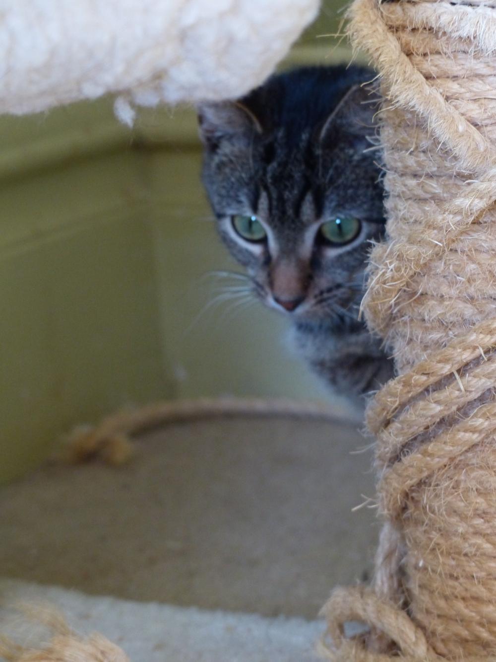 Annie hiding