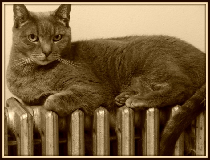 Lily on radiator