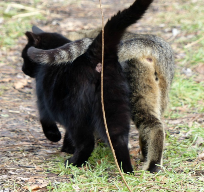 Cats walking together