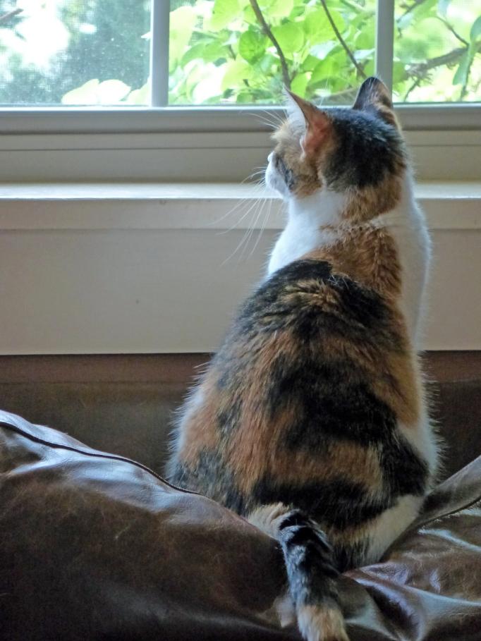 Gabi at the window