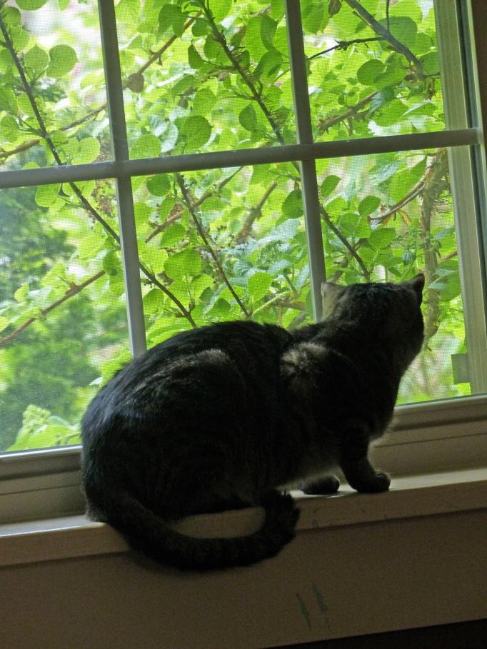 Annie at the window