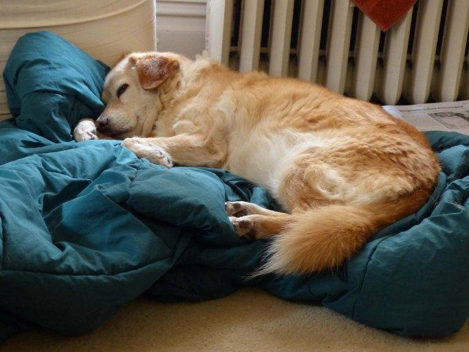 Butterscotch sleeping