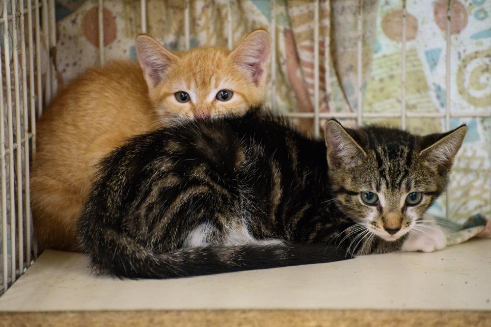Kittens_0001_edited-1