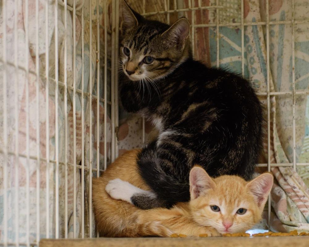 Kittens_0005_edited-1