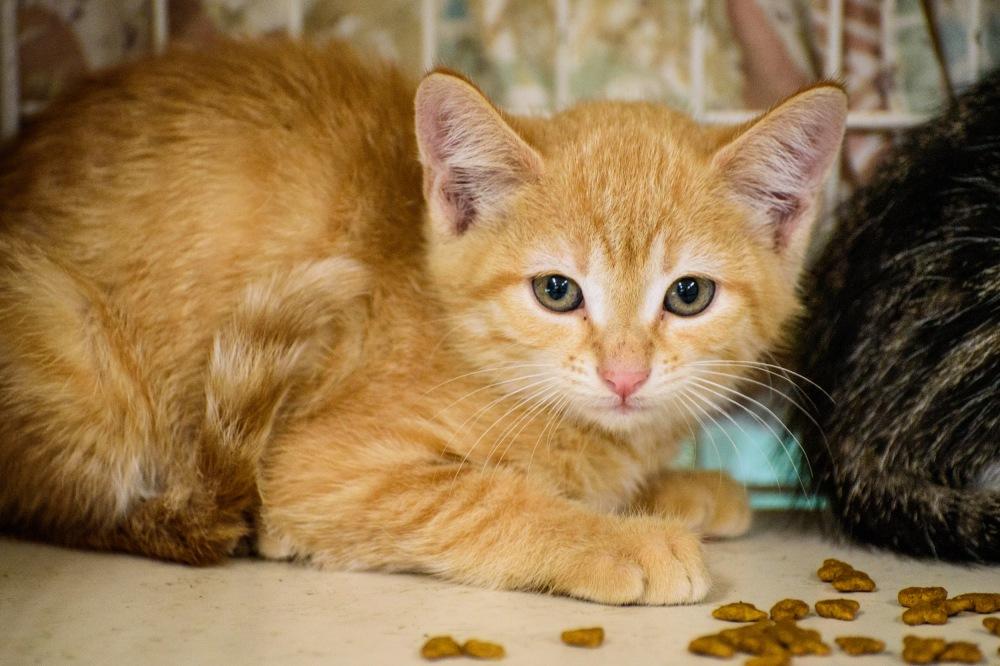 Kittens_0007_edited-1