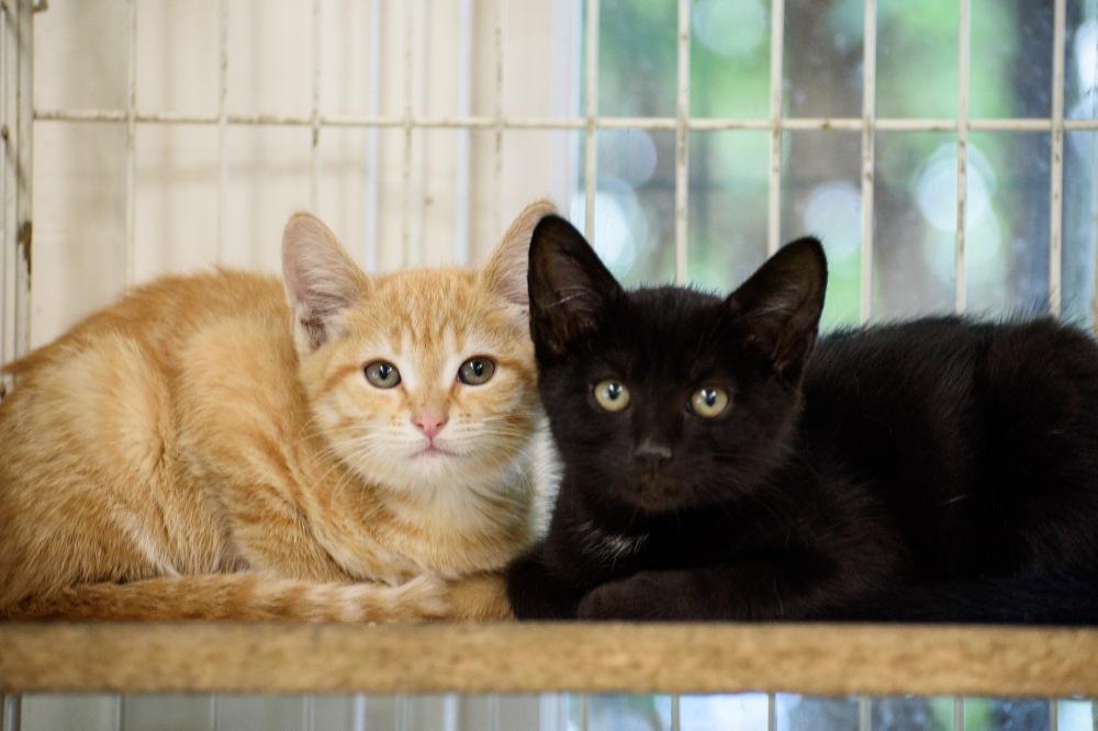 Kittens week2_0015_edited-1