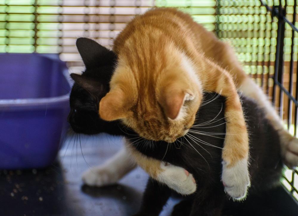 kittensweek3_0056_edited-1