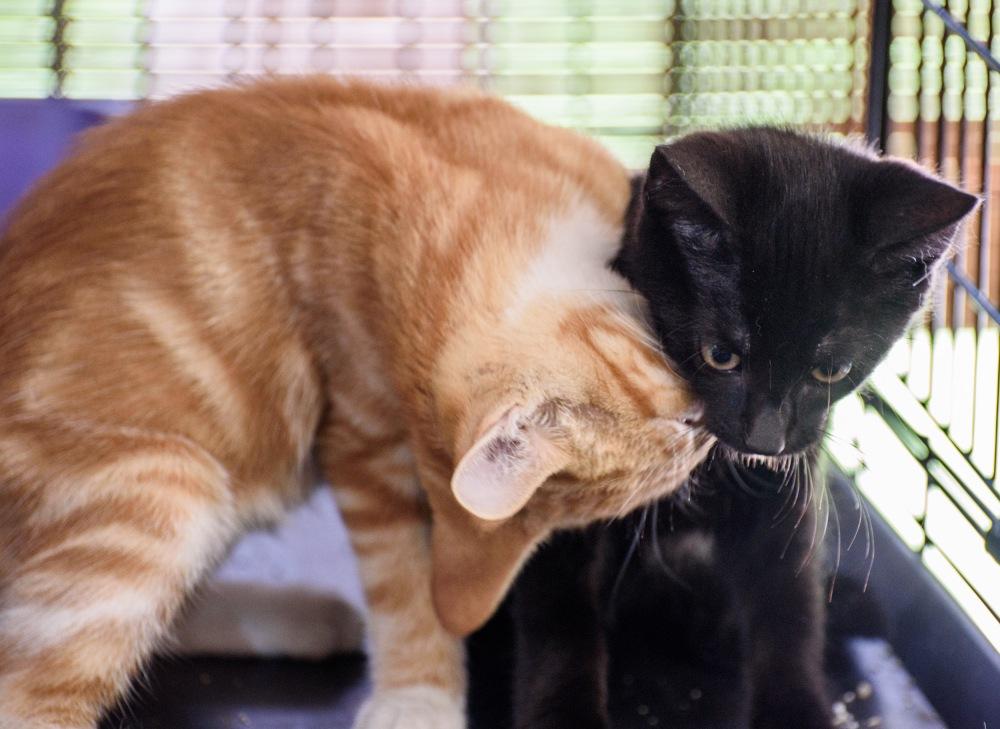kittensweek3_0058_edited-1