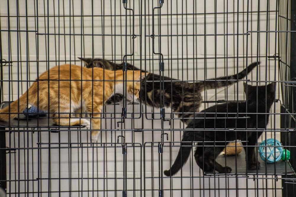 kittensweek3_0072_edited-1