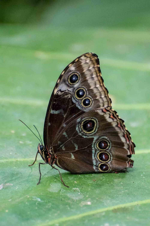 butterfly_0005web
