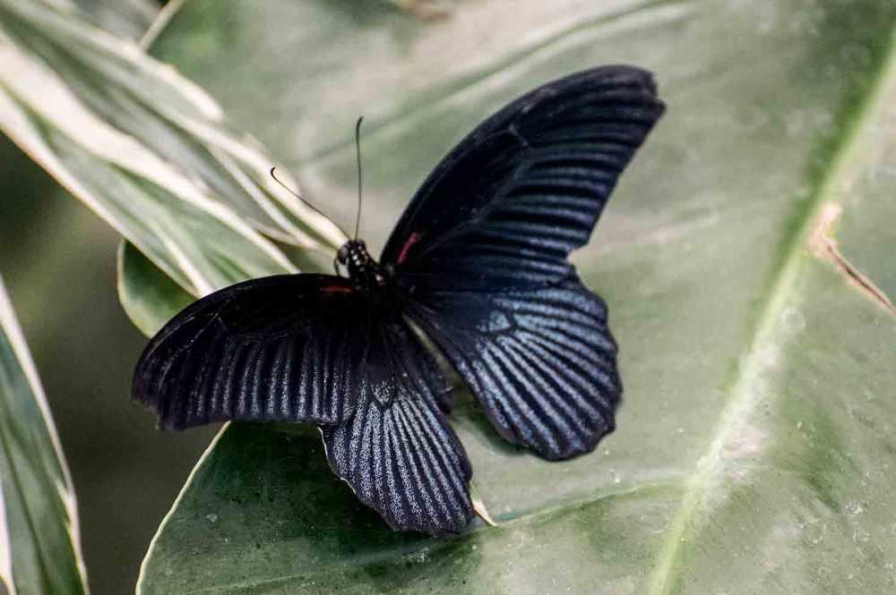 butterfly_0010web