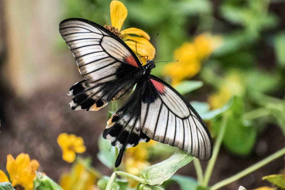 butterfly_0017web