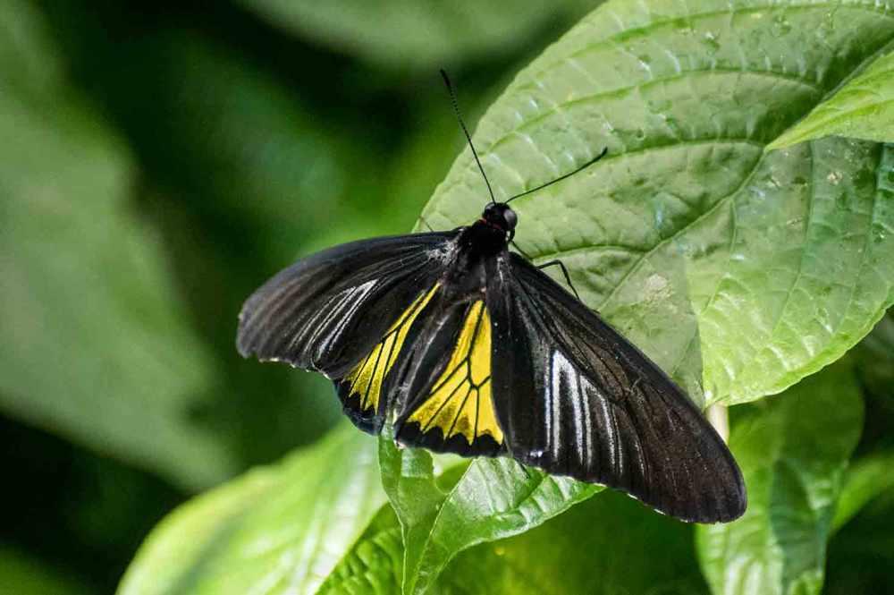 butterfly_0030web