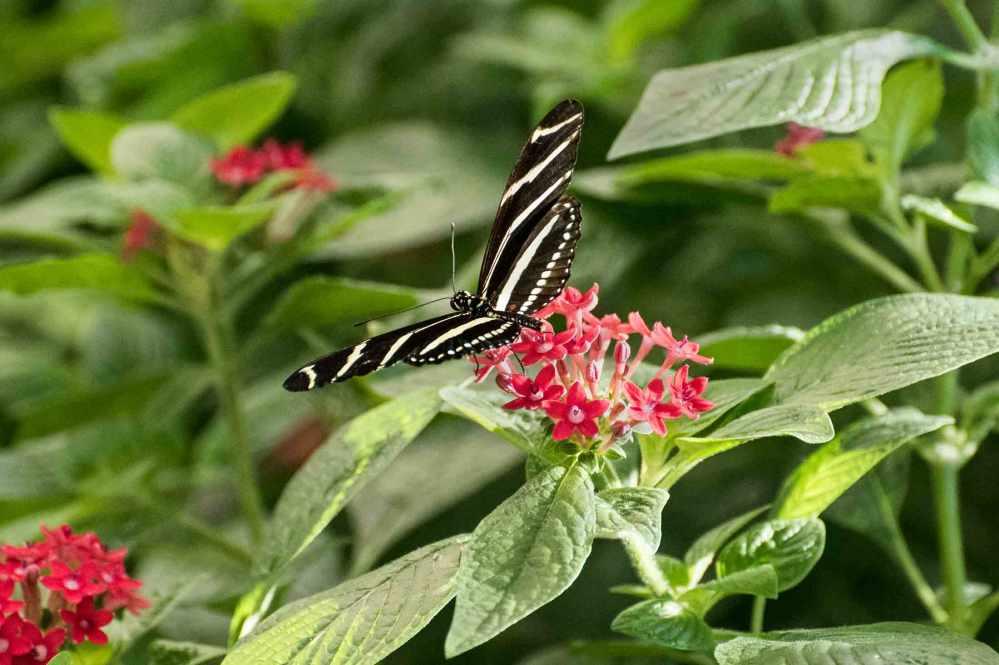 butterfly_0035web