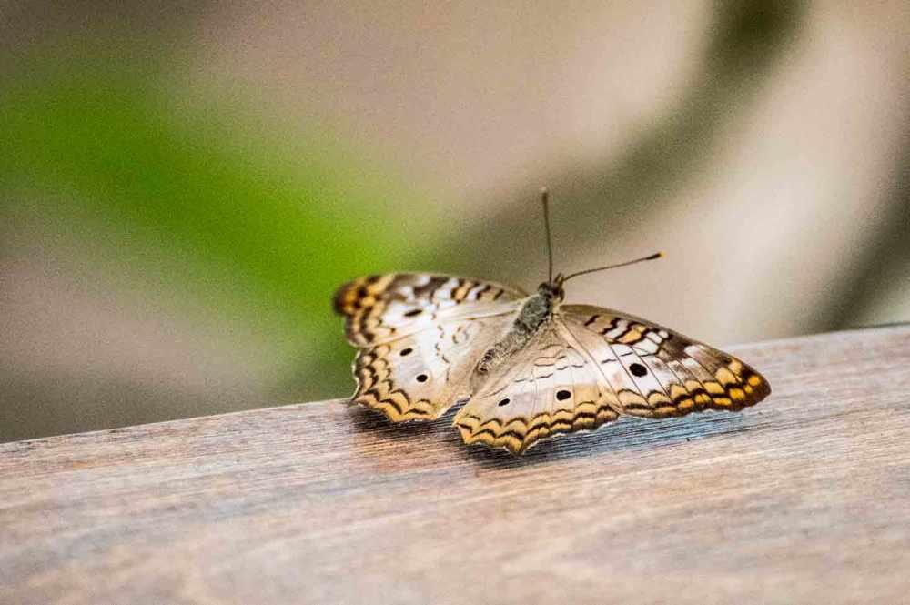 butterfly_0071web