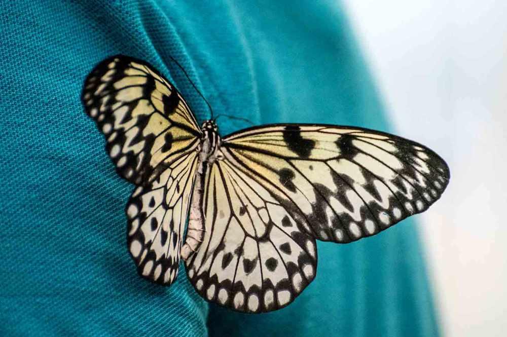butterfly_0079web