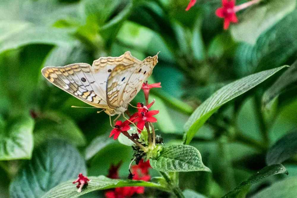 butterfly_0159web