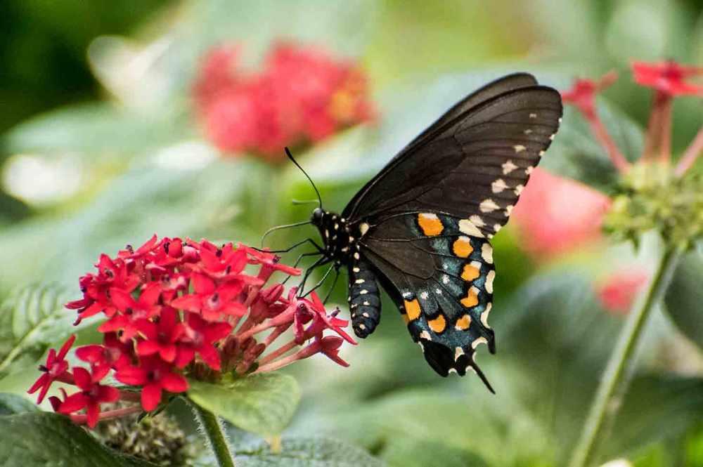 butterfly_0183web