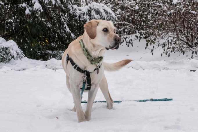 snow-dog_0020web