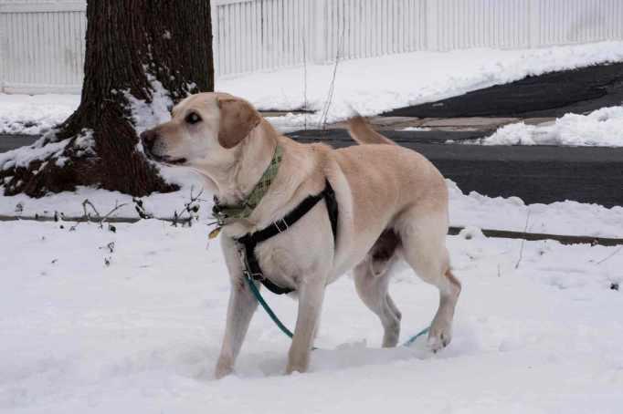 snow-dog_0024web