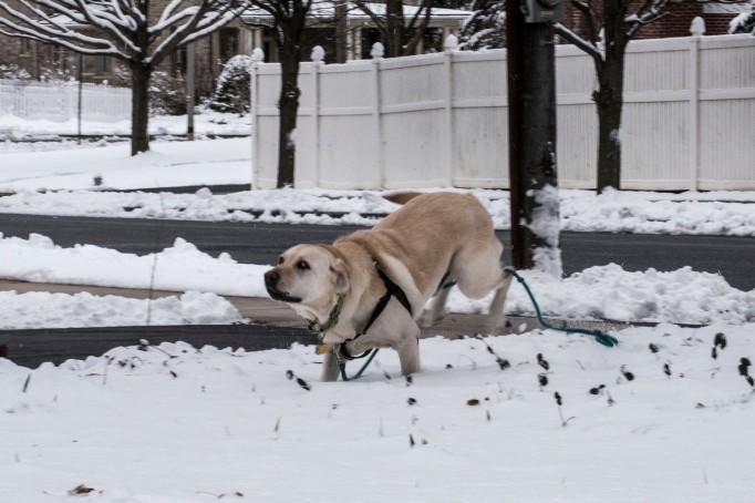 snow-dog_0029web
