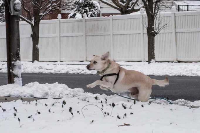 snow-dog_0030web