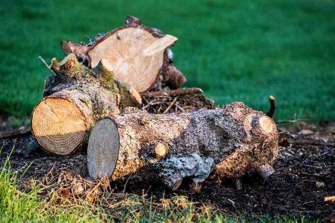 Wood-pile_0008web