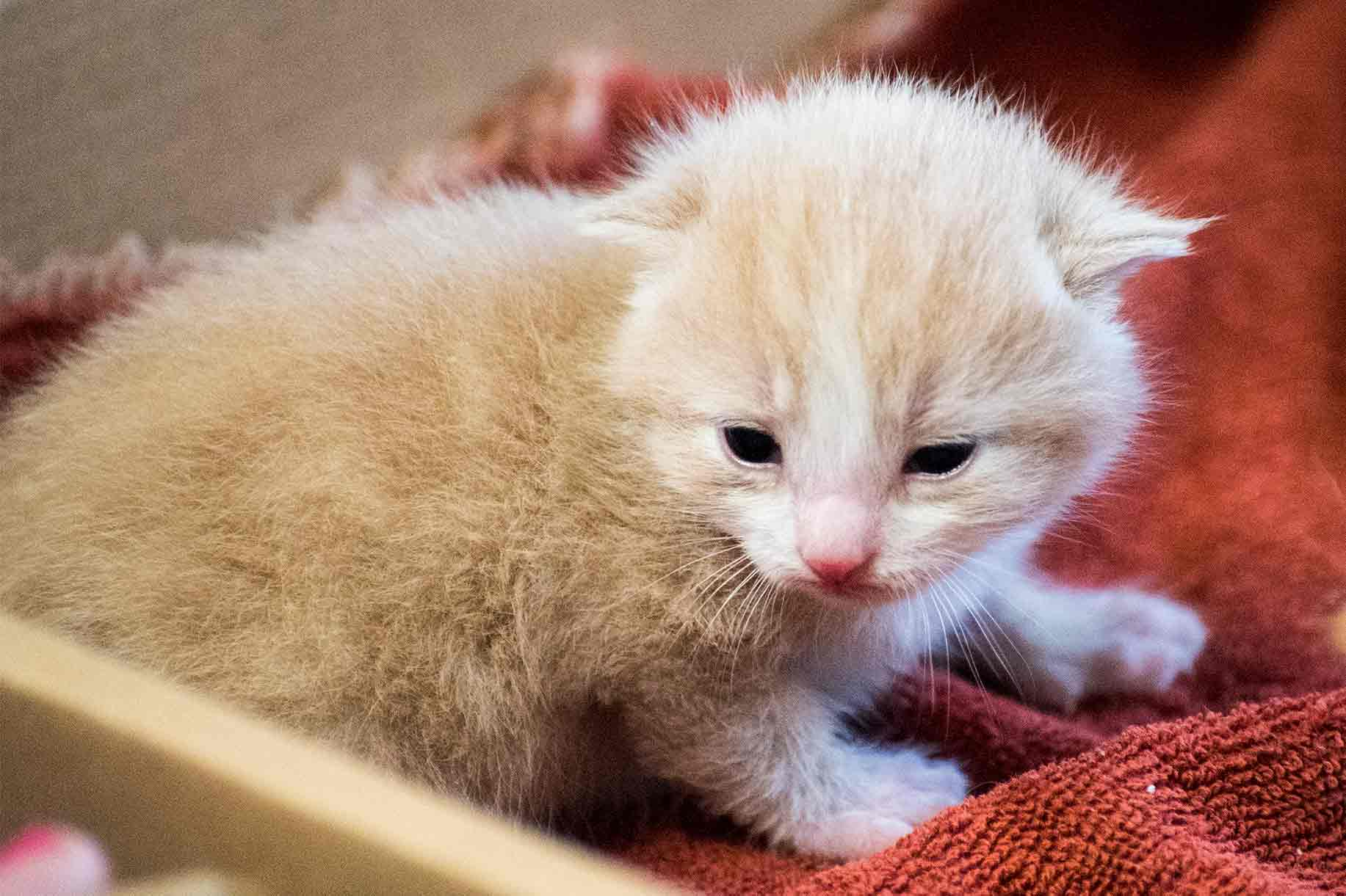 Our Eyes Are Open Two Weeks Old – The Blessing of Animal panions